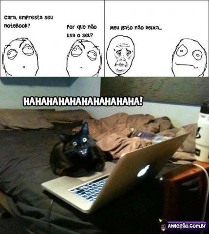 O notebook é do gato e nem adianta reclamar
