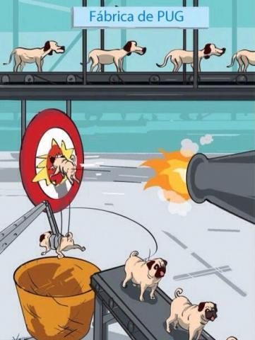 Piada de como são feitos os cachorros da raça Pug